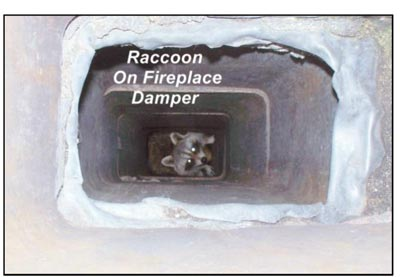 Rodents in Chimney